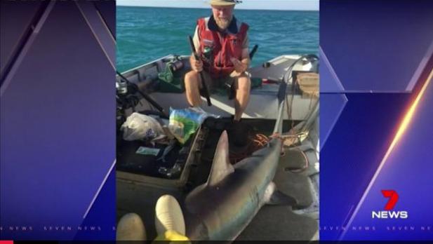 吓尿!澳老人悠然钓鱼 3米长鲨鱼自己跳上船